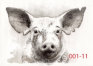 2018 - Sacrifice - 105 drawings of piglet portraits with humanized eyes and ear notches - Jaap de Ruig